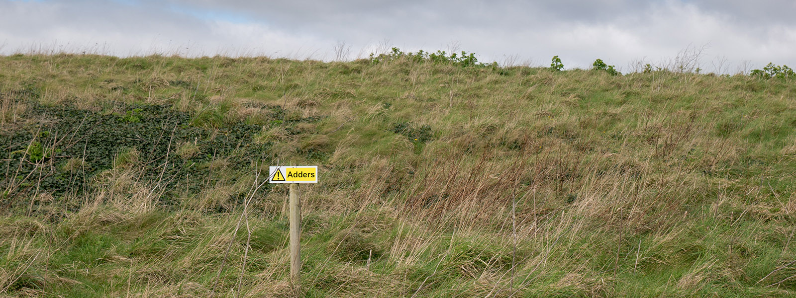 dune area of Bantham important to wildlife